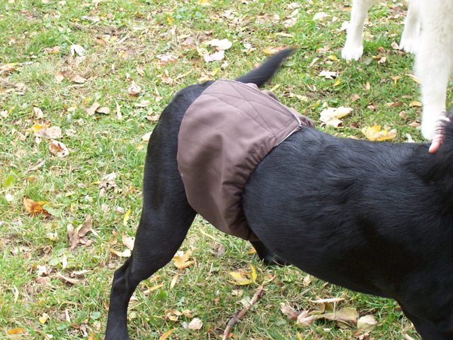 Dogs in Belly Bands: Brown Band