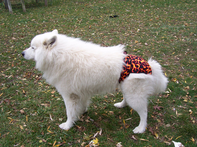 Dogs in Diapers: Hot Flames